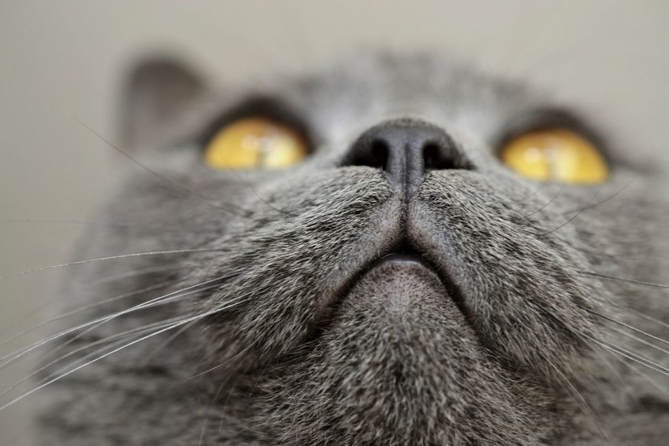 Beautiful stock photos of cat, Animal Eye, Animal Head, Animal Nose, Animal Themes