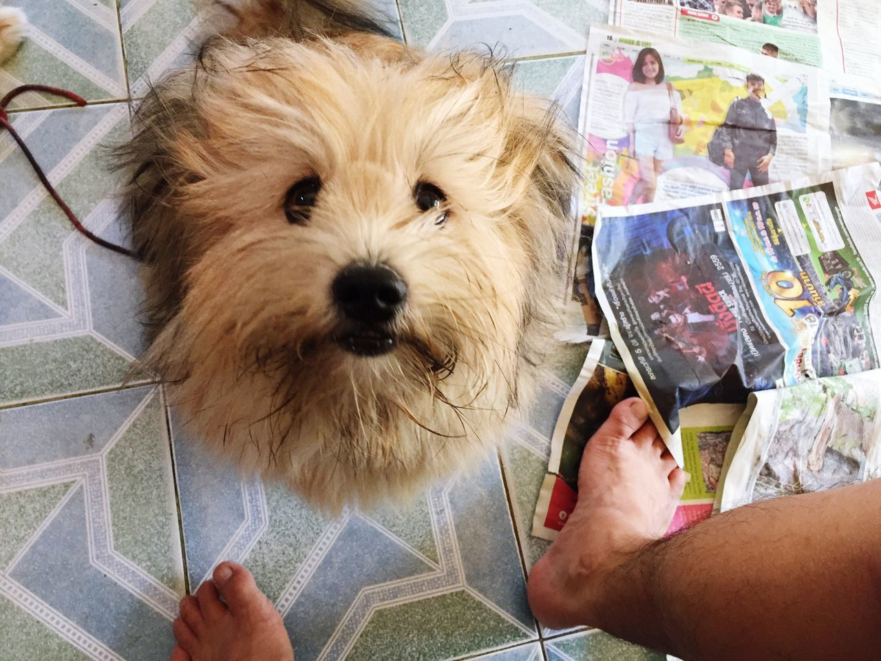 Give me food human Hairy  Silly Dog Hungry Happy Look Up Feed Me Eat All Time Pet Big Funny Dog Walk Around Bangkla In House