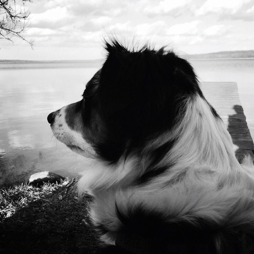 Mein Hund Dog Sky Beauty In Nature Outdoors Tree Nature Landscape