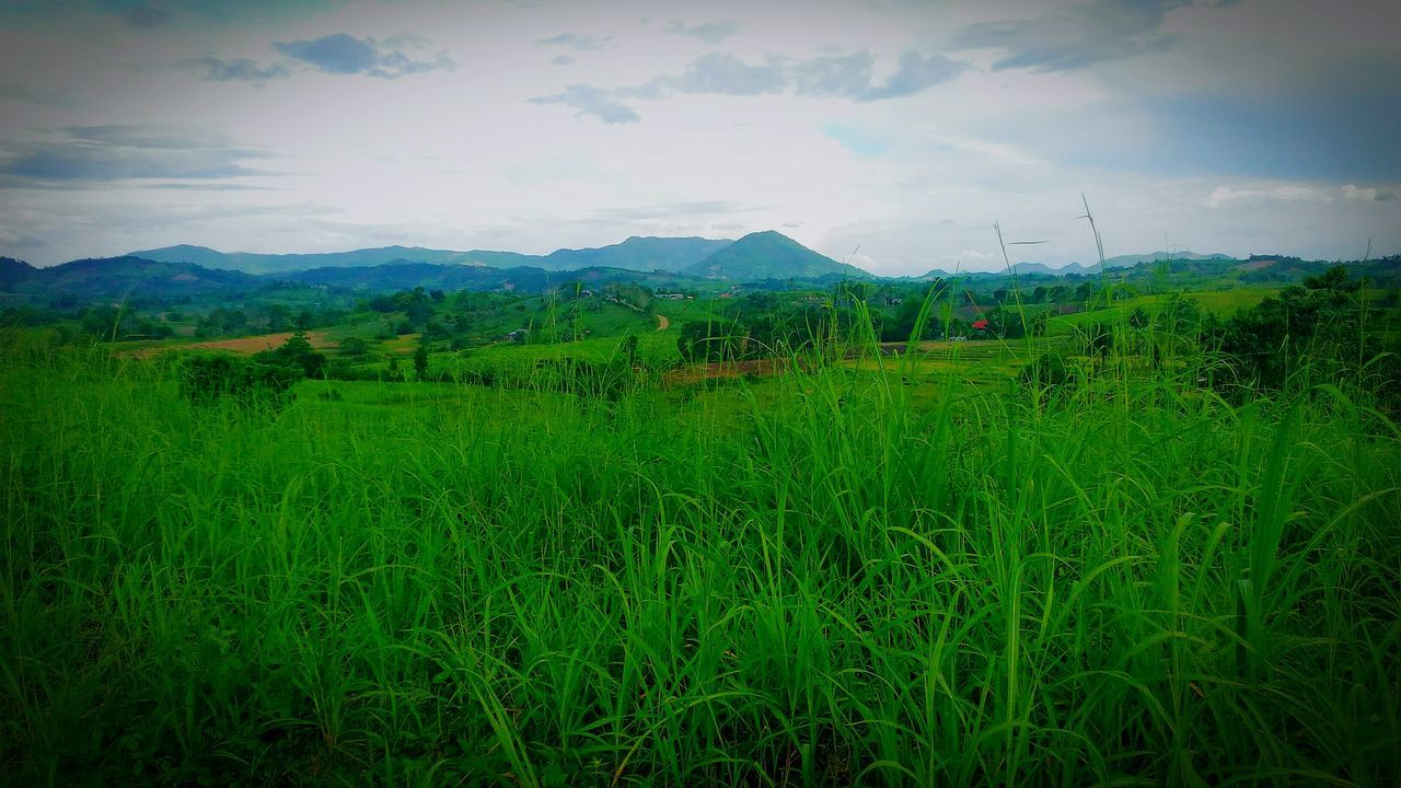 Agriculture Field Crop  Nature Cloud - Sky Green Color Growth No People Sky Rural Scene Mountain Beauty In Nature Outdoors Landscape Grass Tree Day Rice Paddy Freshness Tea Crop Iloilophilippines Pilipinofarm Farmlife