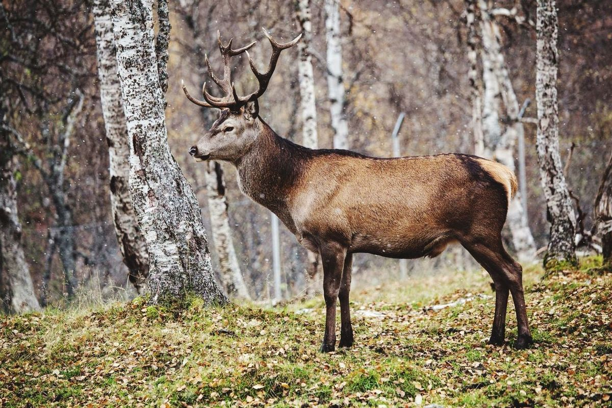 Nature in Norway Animals Nature_collection Nature EyeEm Nature Lover Norway EyeEm Best Shots Eye4photography  Picoftheday Photooftheday Animal