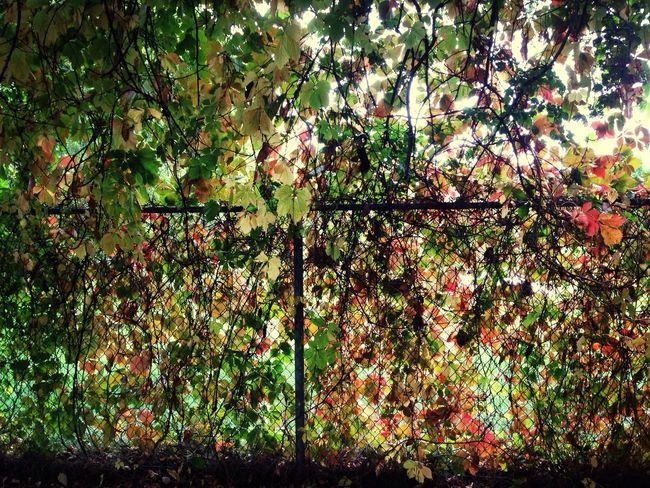 Y luego, caer. Trees Autumn