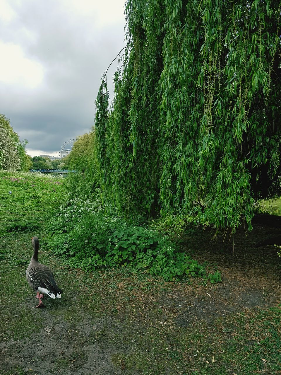 animals in the wild, animal themes, bird, nature, one animal, growth, green color, day, animal wildlife, no people, outdoors, plant, tree, beauty in nature, grass, water, sky