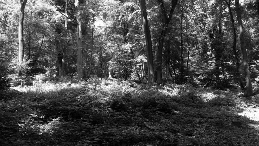 Forest Forestwalk Forest Photography Forests Forest Path Blackandwhite Black And White Black & White Blackandwhite Photography Black&white Black And White Photography Blackandwhitephotography Black And White Collection  Landscape Landscape_Collection Landscape_photography Black Photo Black Photography Tree Trees Tree_collection  Tree Branches Treescollection Tree Art