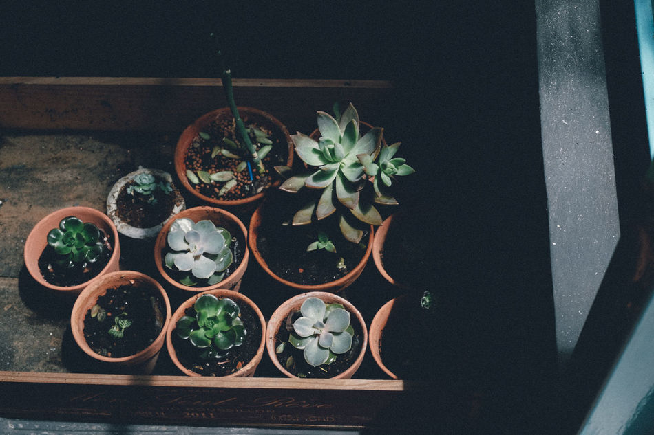 Morning light Beauty In Nature EyeEm Nature Lover Freshness High Angle View Succulent Plant Succulents