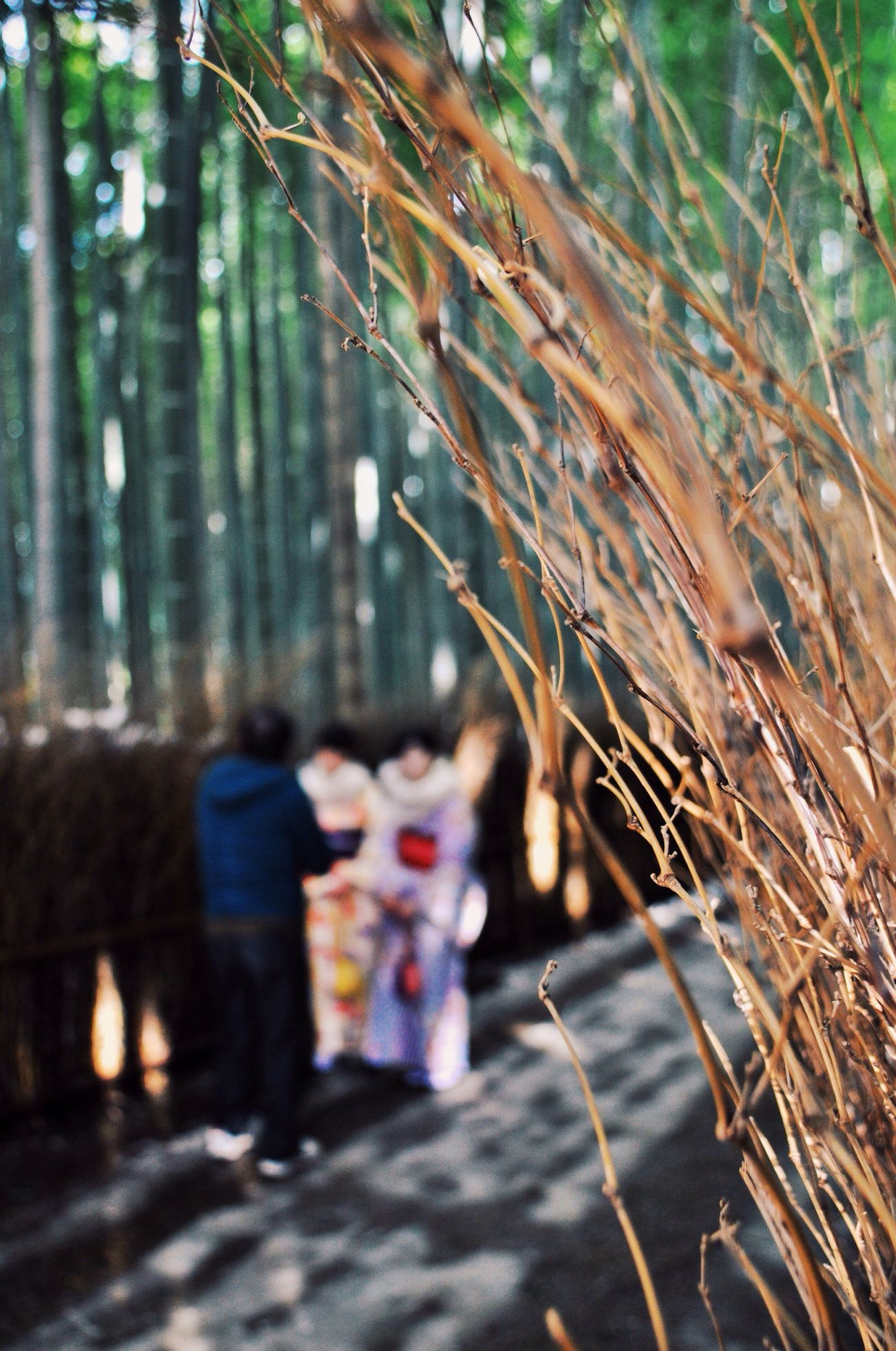 Real People Lifestyles Men Rear View Walking Leisure Activity Women Outdoors Nature Tree Day Togetherness Bamboo Grove