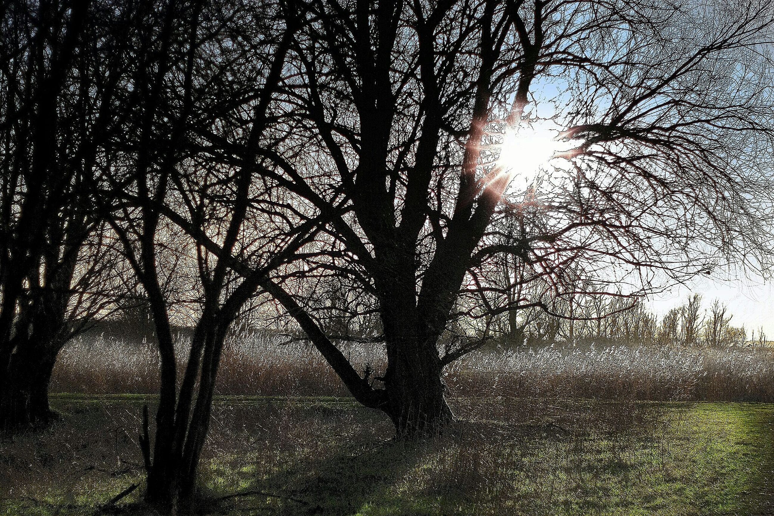 tree, tranquility, sun, sunlight, tranquil scene, branch, nature, growth, beauty in nature, bare tree, silhouette, scenics, grass, sunbeam, field, tree trunk, shadow, sky, landscape, lens flare