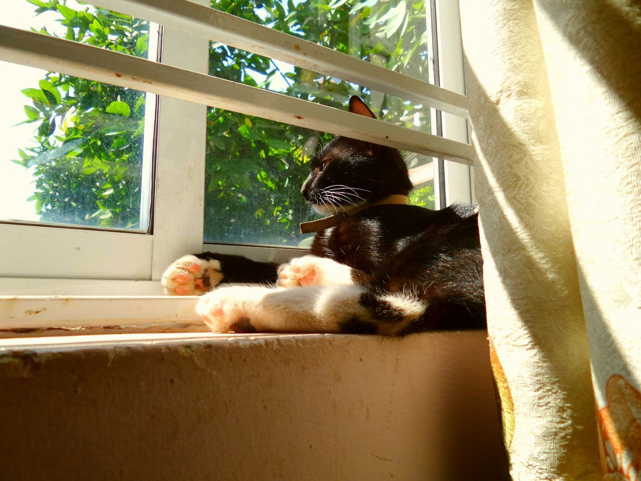 Cats Looking Into The Future Shine Bright Showcase: November This Is How My Cat Looks Like Everyday Window Pet Portraits