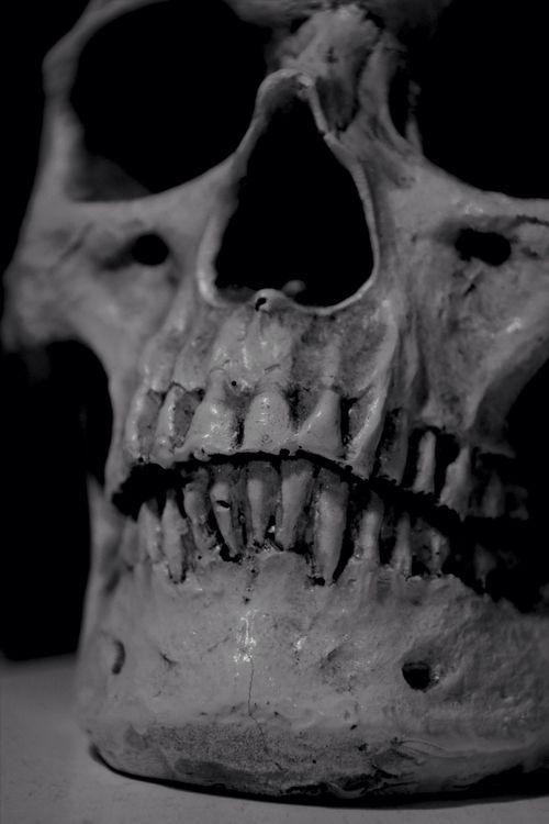 Skull Black And White Monochrome Black & White