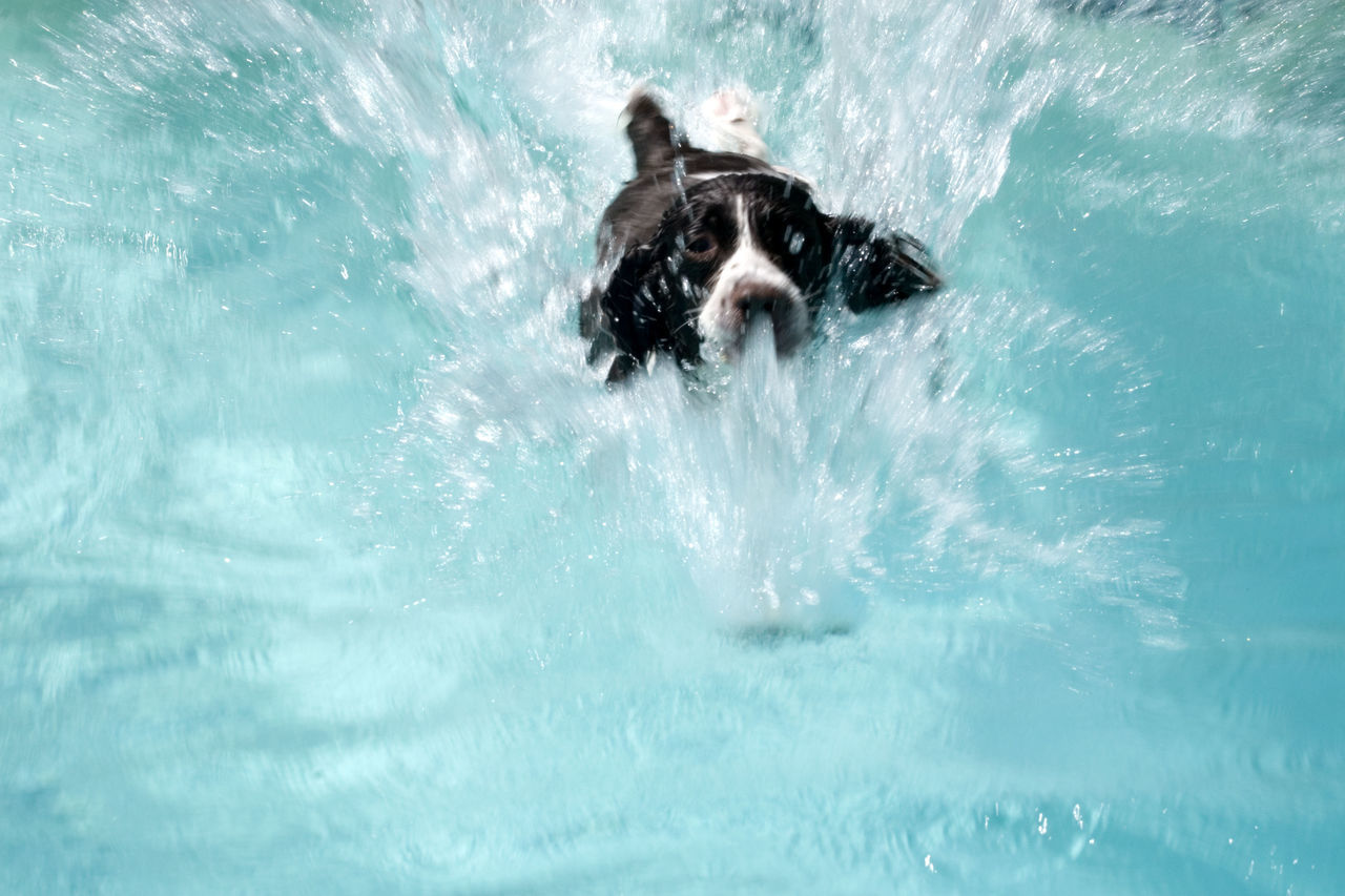 High Angle View Of Dog Swimming In Sea