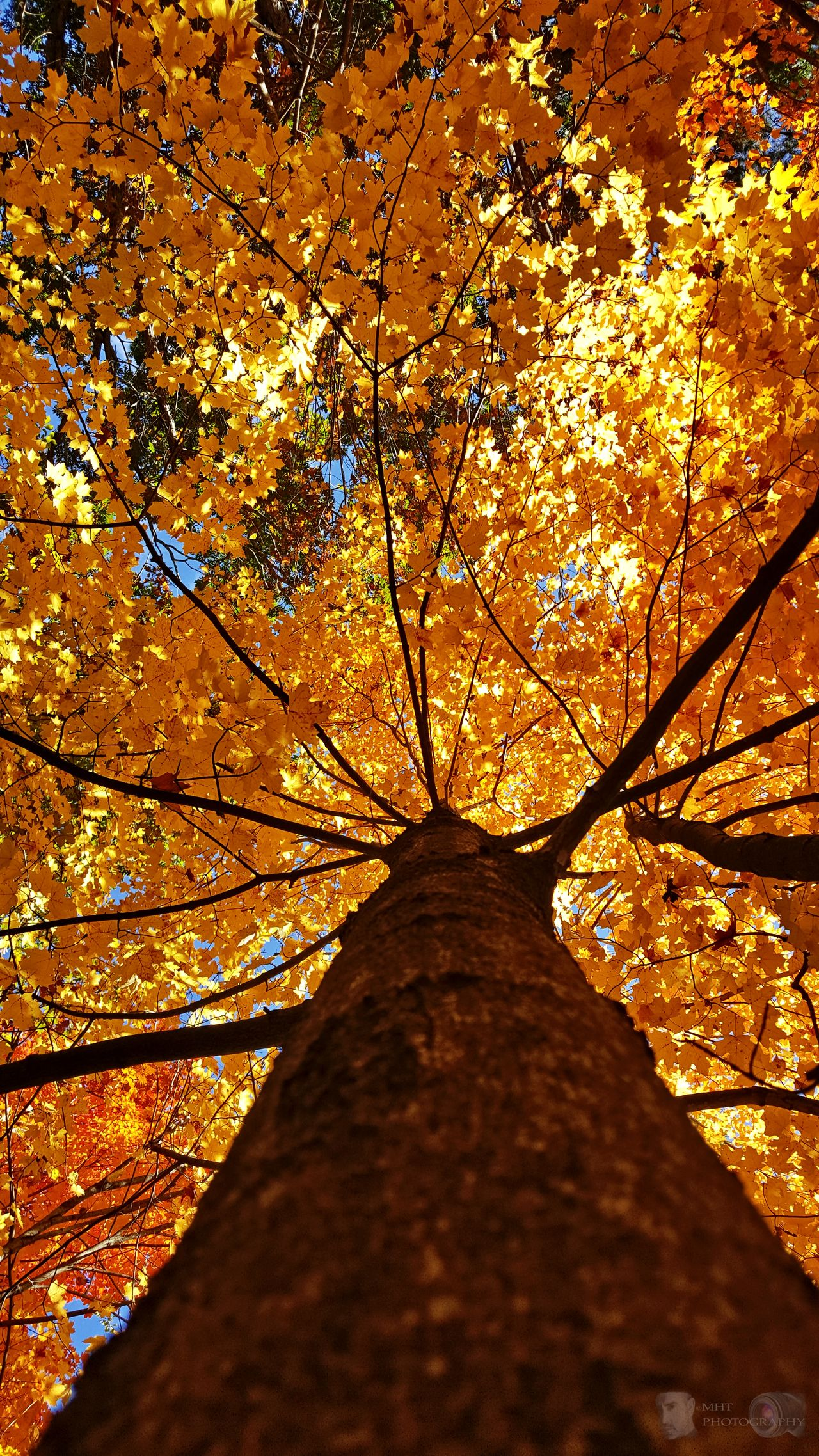 Tree Low Angle View Autumn Beauty In Nature EyeEm Best Shots - Landscape Landscape EyeEm Autumn Collection Fall Colors Fall Beauty Nature Good Morning! Scenics