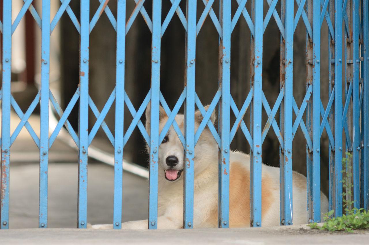 Beautiful stock photos of sicherheit, Animal Themes, Bangkok, Blue, Canine