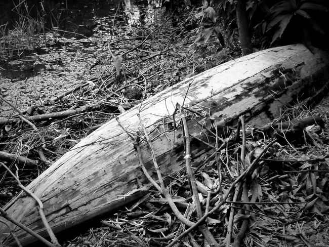 Monochrome Photography : Forest Wood - Material Tranquil Scene Wooden Nature Majestic Non-urban Scene Tranquility Outdoors Old Boat Selective Focus Taking Photo .