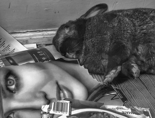 Drunk in love Bunny  EyeEm Best Shots - Black + White Check This Out Enjoying Life Bw_collection Eye4photography