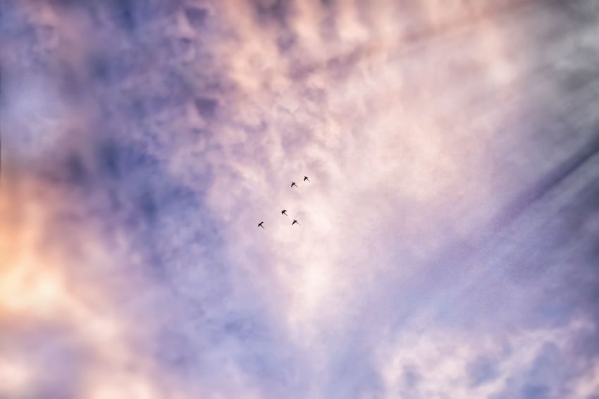 Paradise Flight Flying Cloud - Sky Sky Bird Flock Of Birds Outdoors Nature No People Motion Day Spread Wings Beauty In Nature