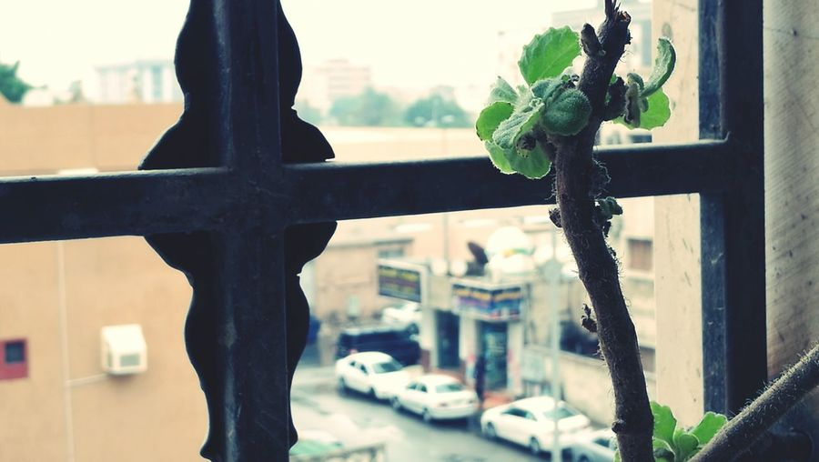My Year My View RainyDay Rains Only Once A Year Raining in KSA after a whole year.....❤❤rain....😍💦💦