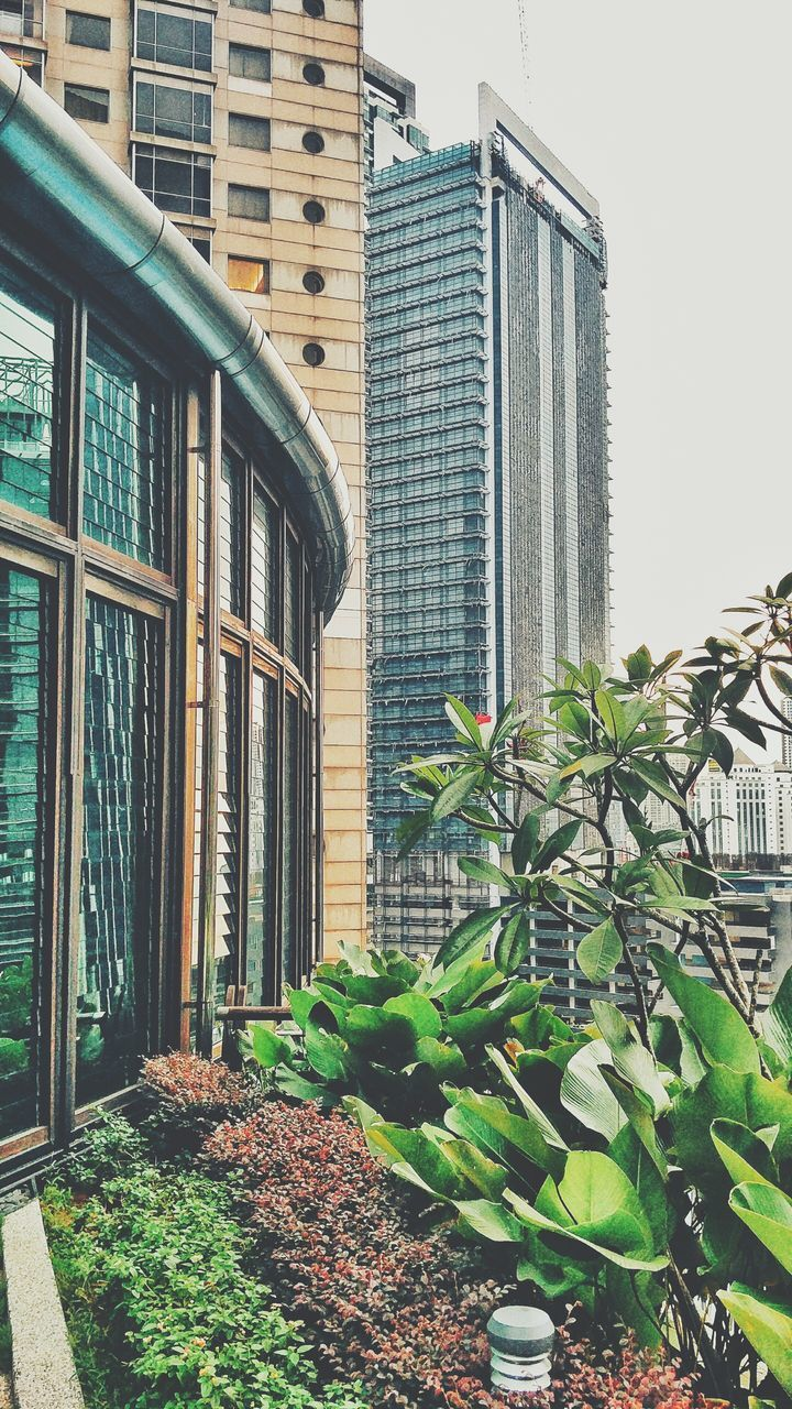 building exterior, architecture, built structure, growth, plant, outdoors, day, window, leaf, potted plant, no people, city, green color, skyscraper, nature