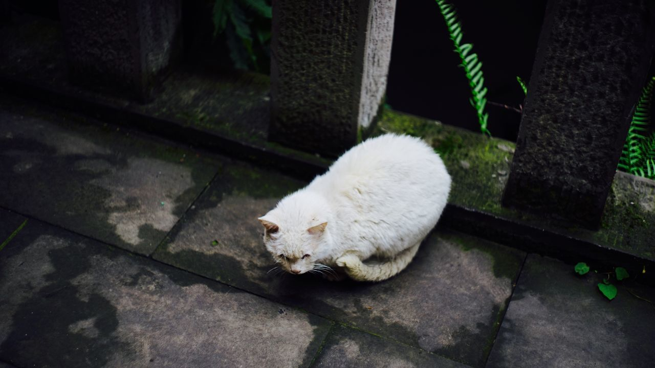 White Color One Animal Feline Domestic Cat Mammal No People Night Outdoors Animal Themes Nature Domestic Animals