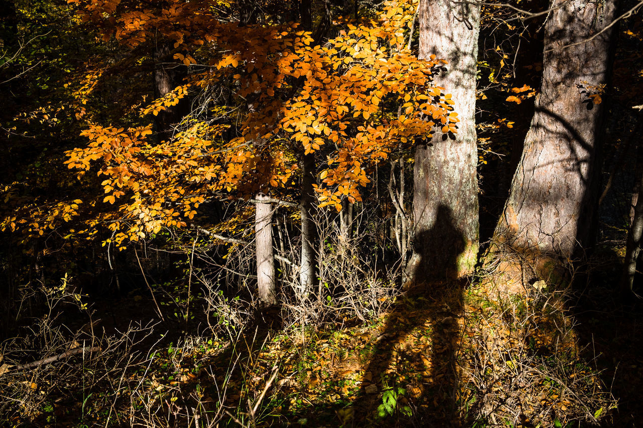 Adventure Autumn Colors Autumn Leaves Finding New Frontiers Italy Leaves_collection Nature Outdoors Shadows & Lights Travel Tree WoodLand Woods