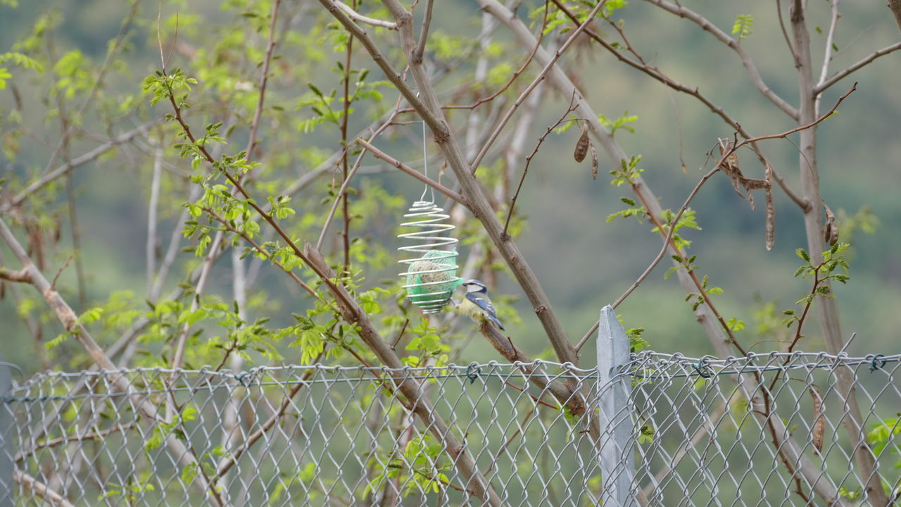 safety, protection, security, one animal, day, metal, focus on foreground, barbed wire, outdoors, nature, animal themes, no people, animals in the wild, close-up