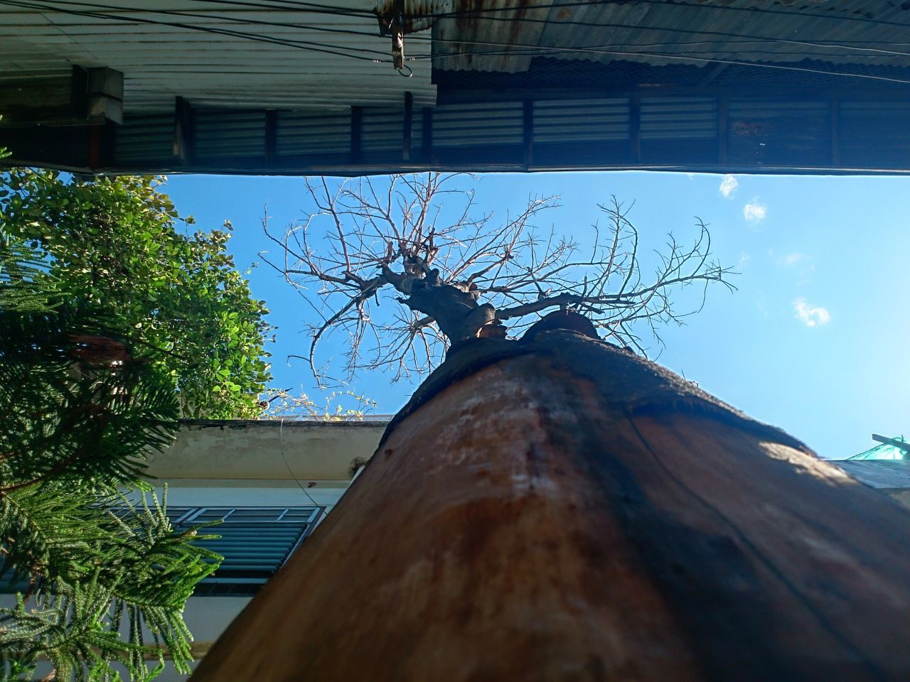 Zinc Disorganized Lack Of Care View Died Tree Texture Details Surface Dry Day Tree No People Outdoors Built Structure Architecture Sky Close-up Nature