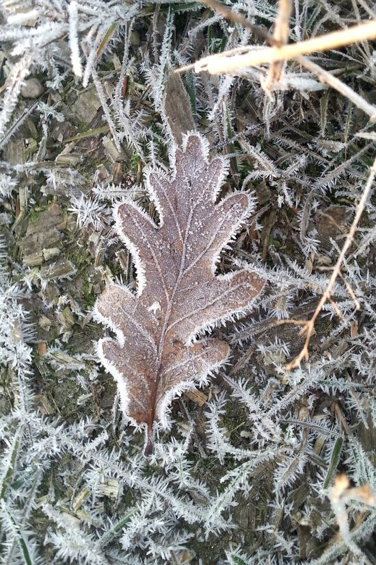 Berlin Close-up Nature Outdoors Leaf Tree Beauty In Nature Frost Stadtnatur Spazieren Grass Naturelover Laub