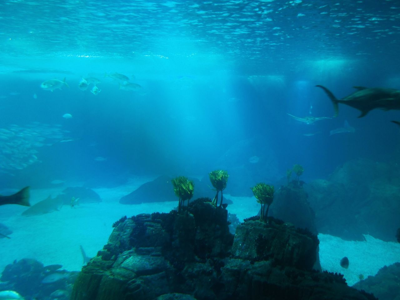 underwater, sea life, fish, water, large group of animals, undersea, nature, animals in the wild, animal themes, swimming, rock - object, no people, sea, beauty in nature, day, aquarium, outdoors