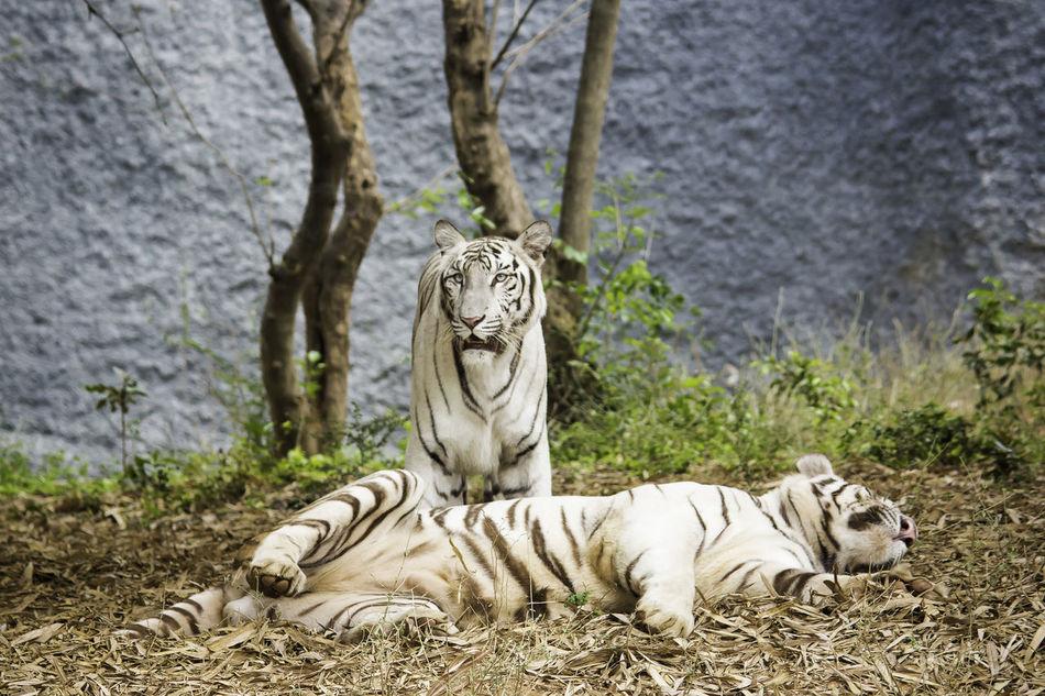 Beautiful stock photos of einhorn, animals in the wild, wildlife, tree trunk, relaxation