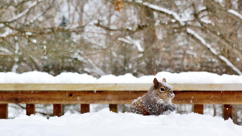 Beautiful stock photos of eichhörnchen, Animal Themes, Animal Wildlife, Animals In The Wild, Cold Temperature
