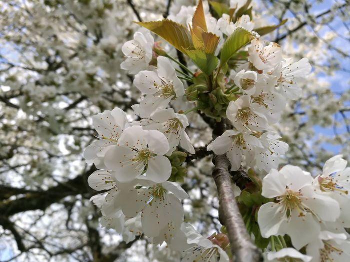 Nature Beauté De La Nature Picsofday Plant EyeEm Nature Lover