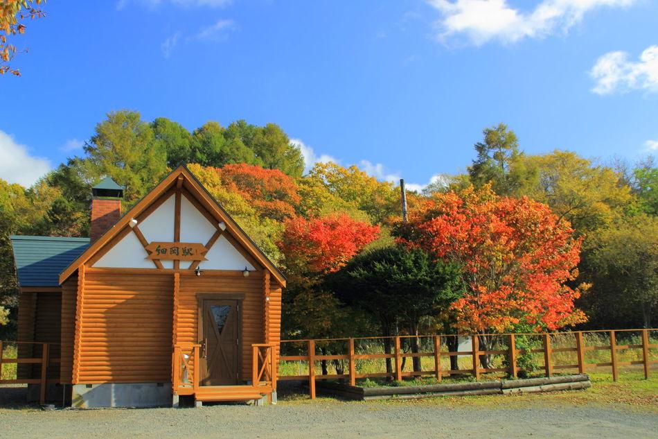 2014.10.12 細岡駅と紅葉。 Hokkaido EyeEm Nature Lover Fall_collection Landscape_Collection