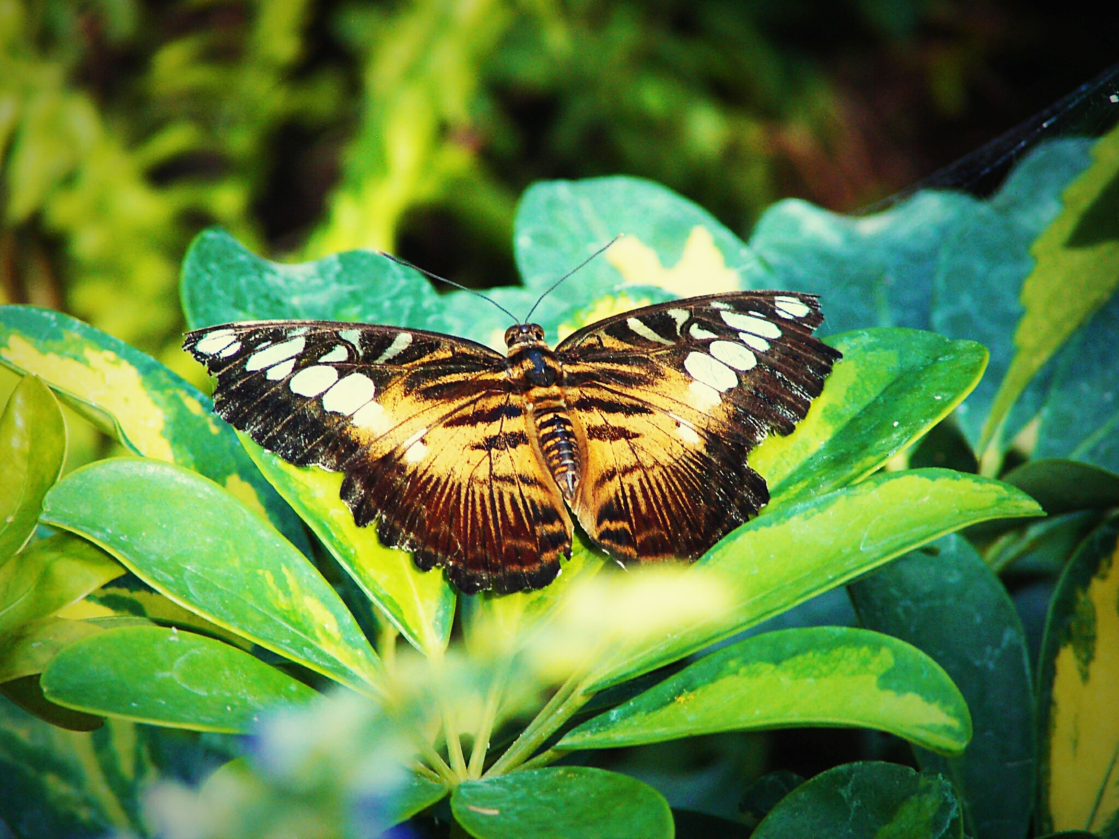 one animal, animal themes, animals in the wild, insect, wildlife, butterfly - insect, butterfly, animal markings, leaf, natural pattern, close-up, animal wing, focus on foreground, plant, nature, beauty in nature, animal antenna, green color, fragility, outdoors