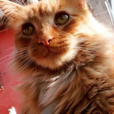 Catlover gato posero XD