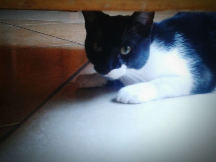 My Love ❤ Cat♡