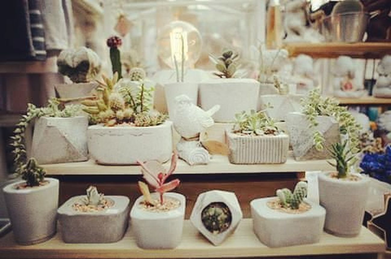 ธรรมชาติกับงานดิบๆ งานดิบ กระถาง กระถางกระบองเพชร กระถางต้นไม้ ของแต่งบัาน ของแต่งสวน Loft Rustic Handmade Dib_te DIY Design Geometric Gardenia Gardens Gardener Gardeners Cactusclubs Cactuslover Cactusmagazine Cactusthailand Cactus
