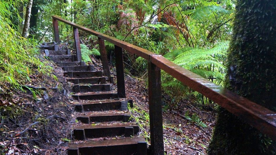 Stairs Taking Photos Relaxing Nature