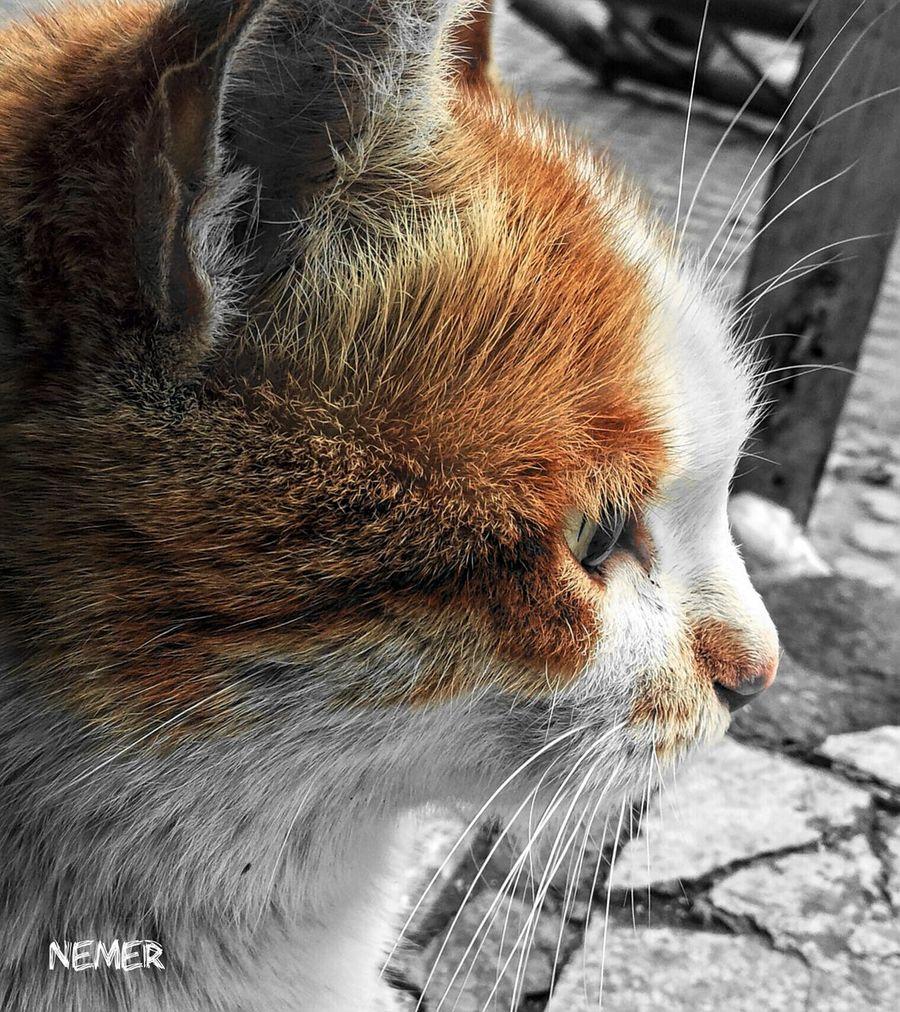 Jordan Amman First Eyeem Photo Nautre Relaxing Downtown Orange Black And Orange Orange Color Orangeisthenewblack White Cat Cat LoversCat♡ CATTY Catty Eyes Cattycat Cats Of EyeEm Cats 🐱 Cat Photography Calm