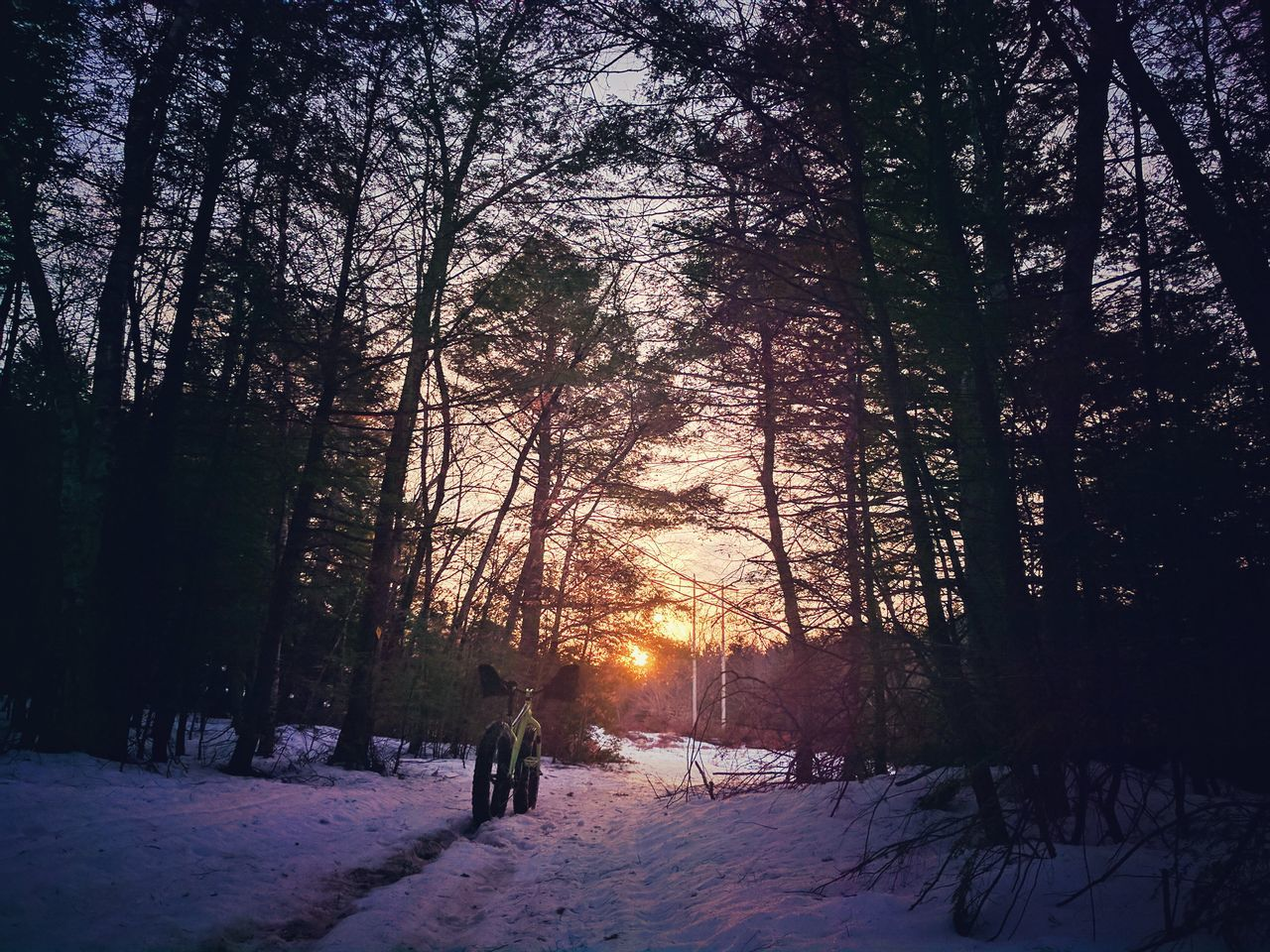 tree, winter, snow, cold temperature, nature, weather, beauty in nature, sun, tranquility, tranquil scene, forest, scenics, sunset, growth, outdoors, sunlight, landscape, real people, sky, full length, day, one person, people