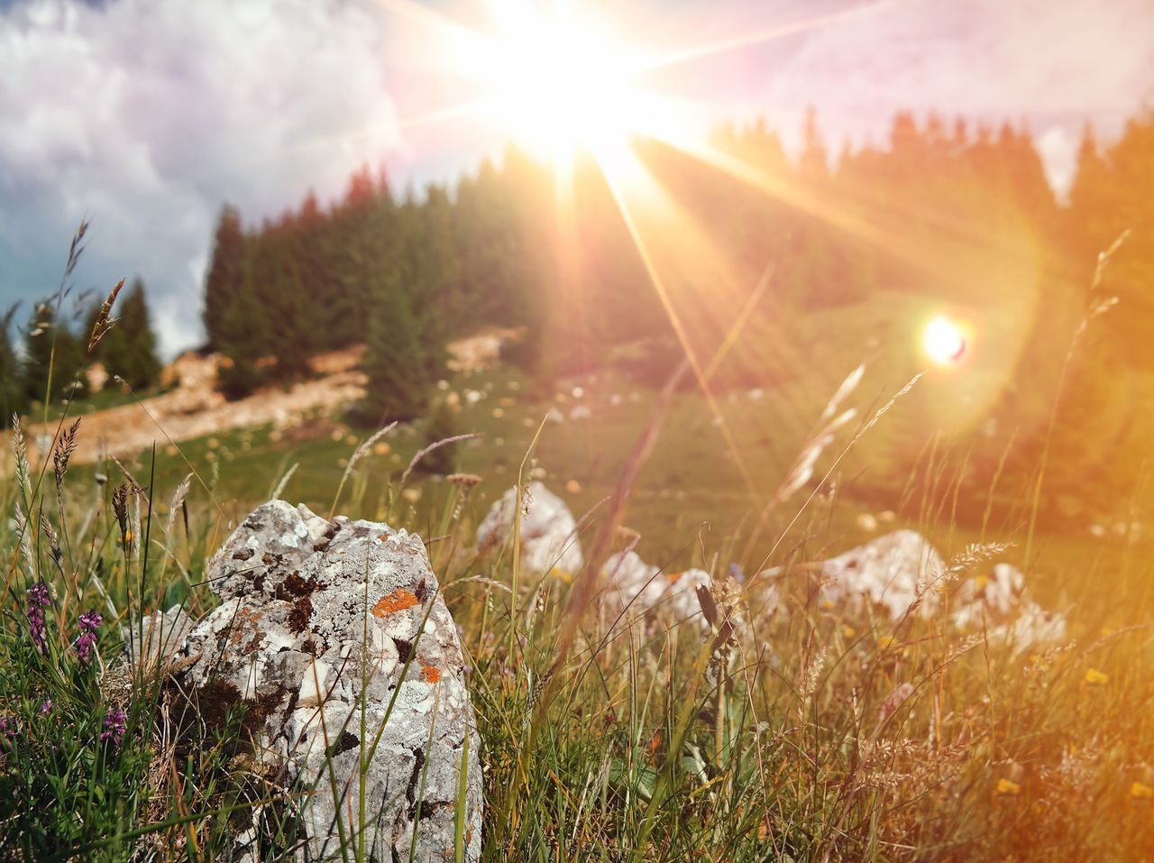 Mountain flares... Sunlight Lens Flare Sun Sunbeam Growth Nature Grass Field Beauty In Nature Tranquility Outdoors Tranquil Scene Plant Day Sunset Scenics Close-up Landscape Sky Forest Mountain Rock Landscapes Landscape_Collection Made In Romania