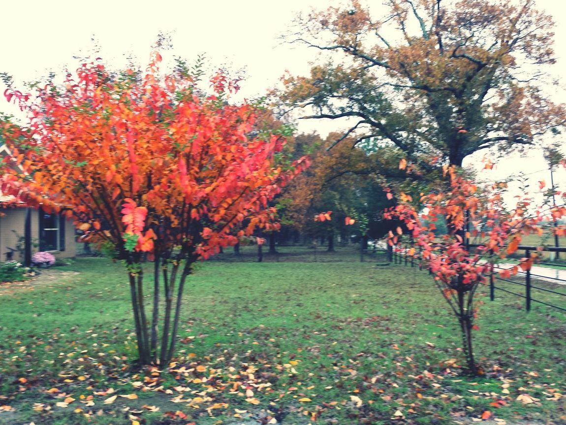 Fall Colors Orange Leaves Raining
