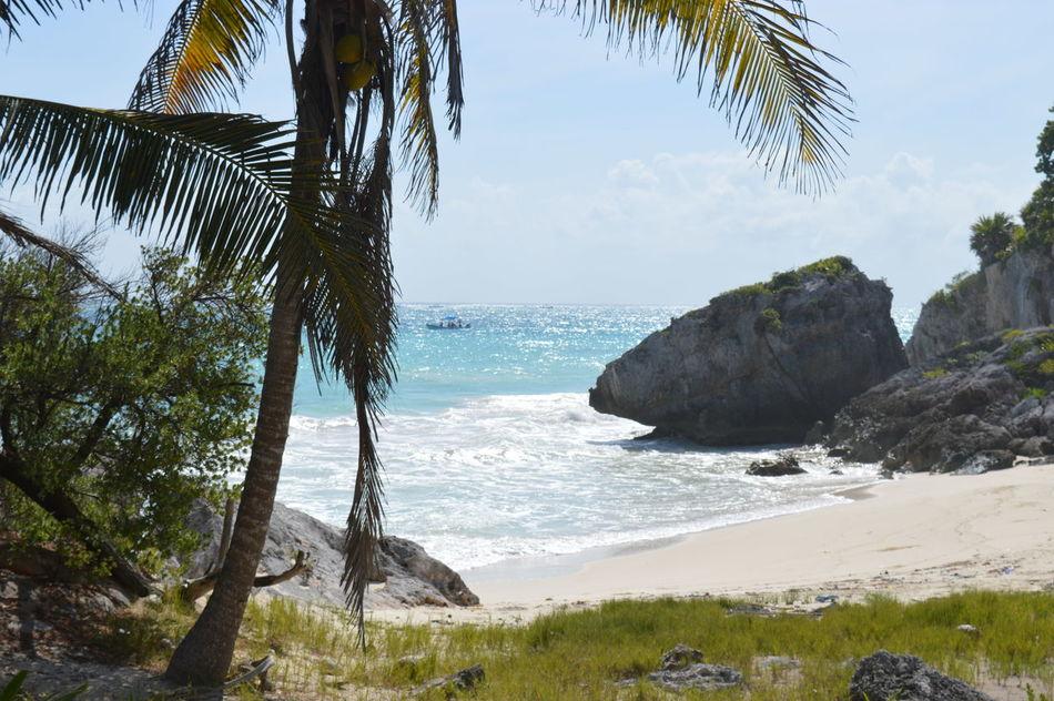 Beach Beauty In Nature Caribbean Sea Caribbean_beautiful_landscapes Coastline Horizon Over Water Nature Palm Tree Paradise Sand Sea Sky Tulum Tulum , Rivera Maya. Tulum Beach Tulum, Mexico Water