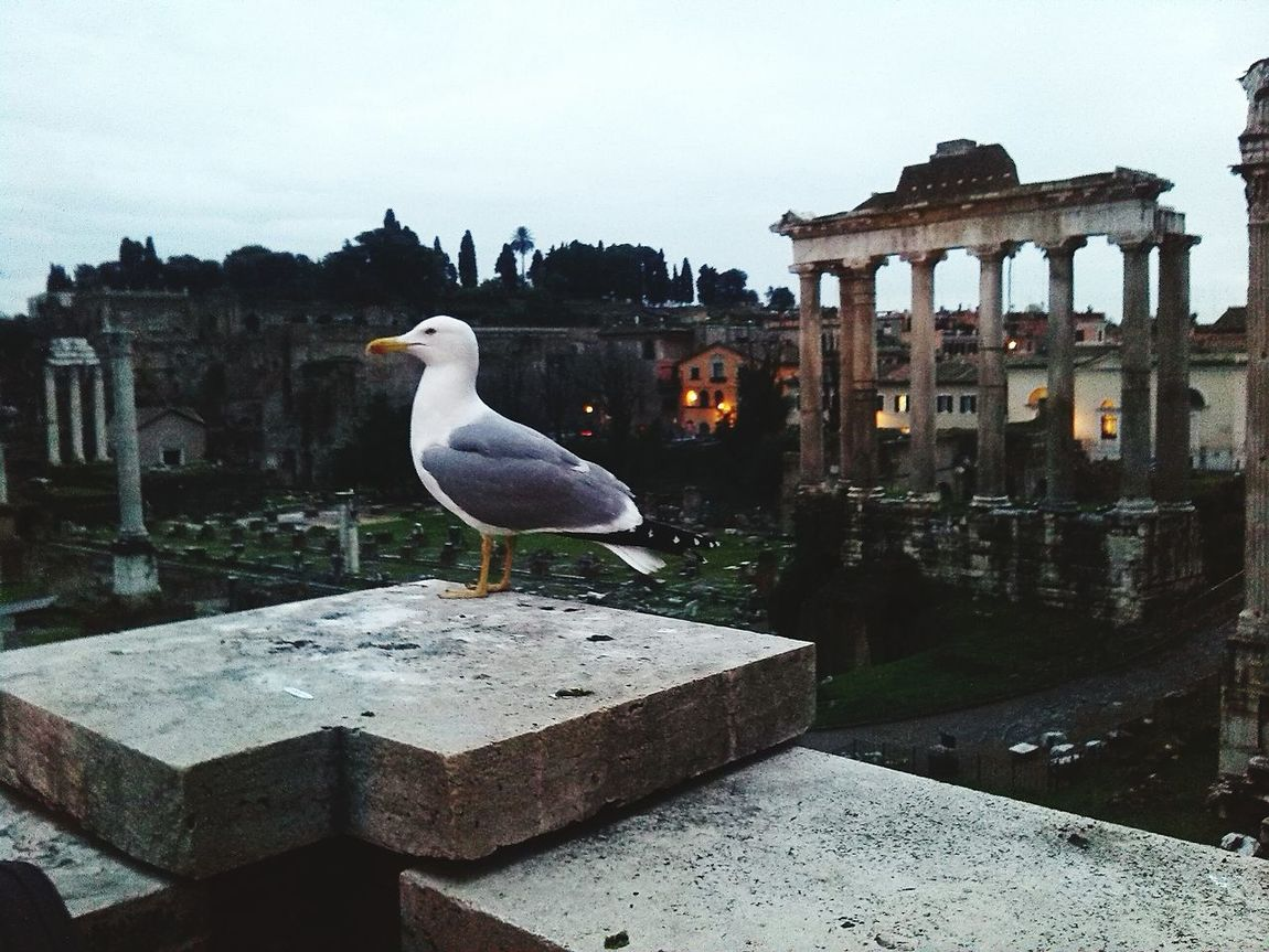 Italy In Rome Ruins Seagull Taking Photos Photo Foto Italia Roma Ruinas The Great Outdoors - 2017 EyeEm Awards EyeEmNewHere