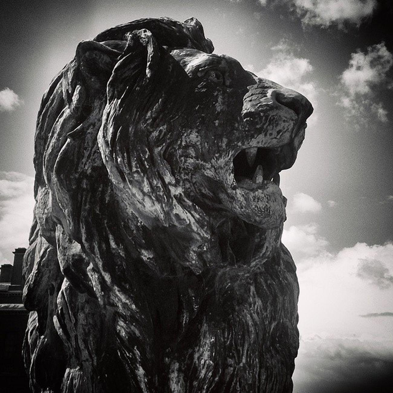 Holkham Holkhamhall Lion Statues statueporn statue lion archilovers architecture architectureporn architexture architecturelovers archidaily artphoto_bw bnw_zone bnw_captures bnw_universe bnw_diamond bnw_hub bnw_wonderful bnw_worldwide BlackAndWhite blackandwhiteonly cloudporn skyporn BlackAndWhitePhotography blacknwhite_perfection bnw_life bnw_sniper bnw