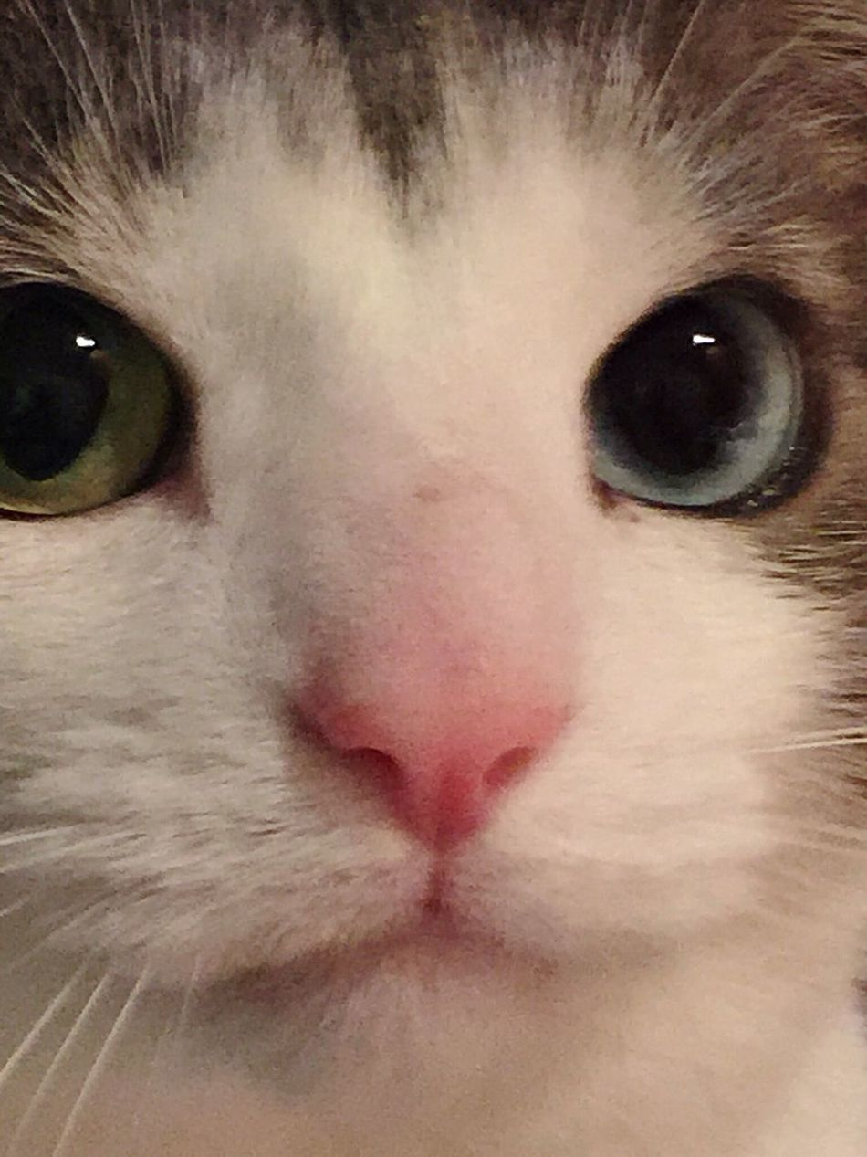Nopeople Savedhim Animal Lovers Maine Rescued Pets Cats Of EyeEm Upclose And Personal Face Only Focus On Face So Soft Attitude