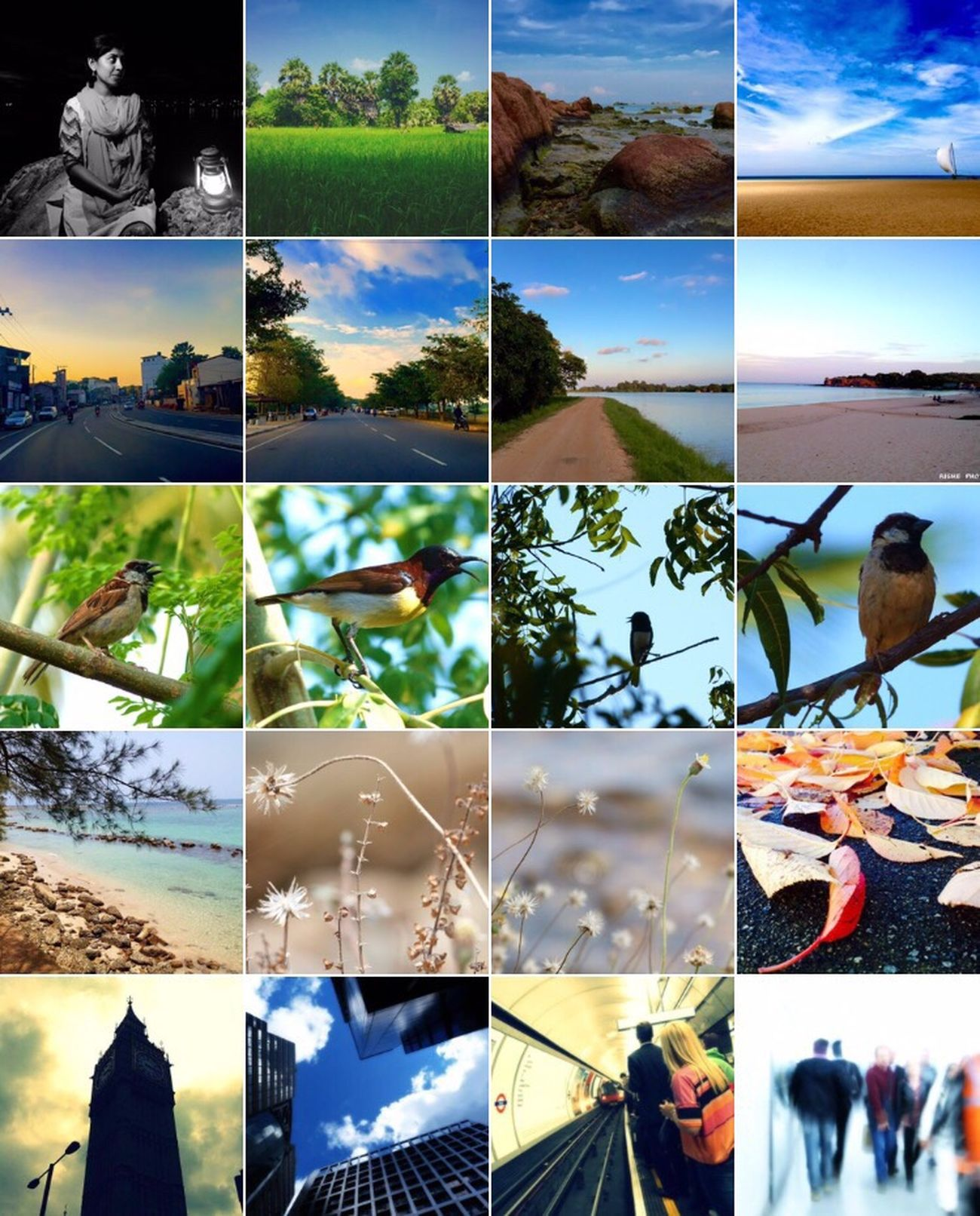 Collage Digital Composite Composite Image Montage Multiple Image Sky Nature No People Close-up Outdoors Day Collections