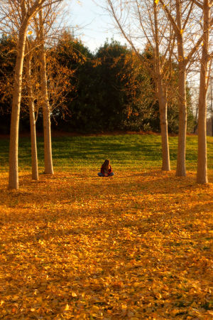 Autumn Beauty In Nature Branch Day Field Grass Landscape Leaf Nature One Person Outdoors People Sky Tree Tree Trunk