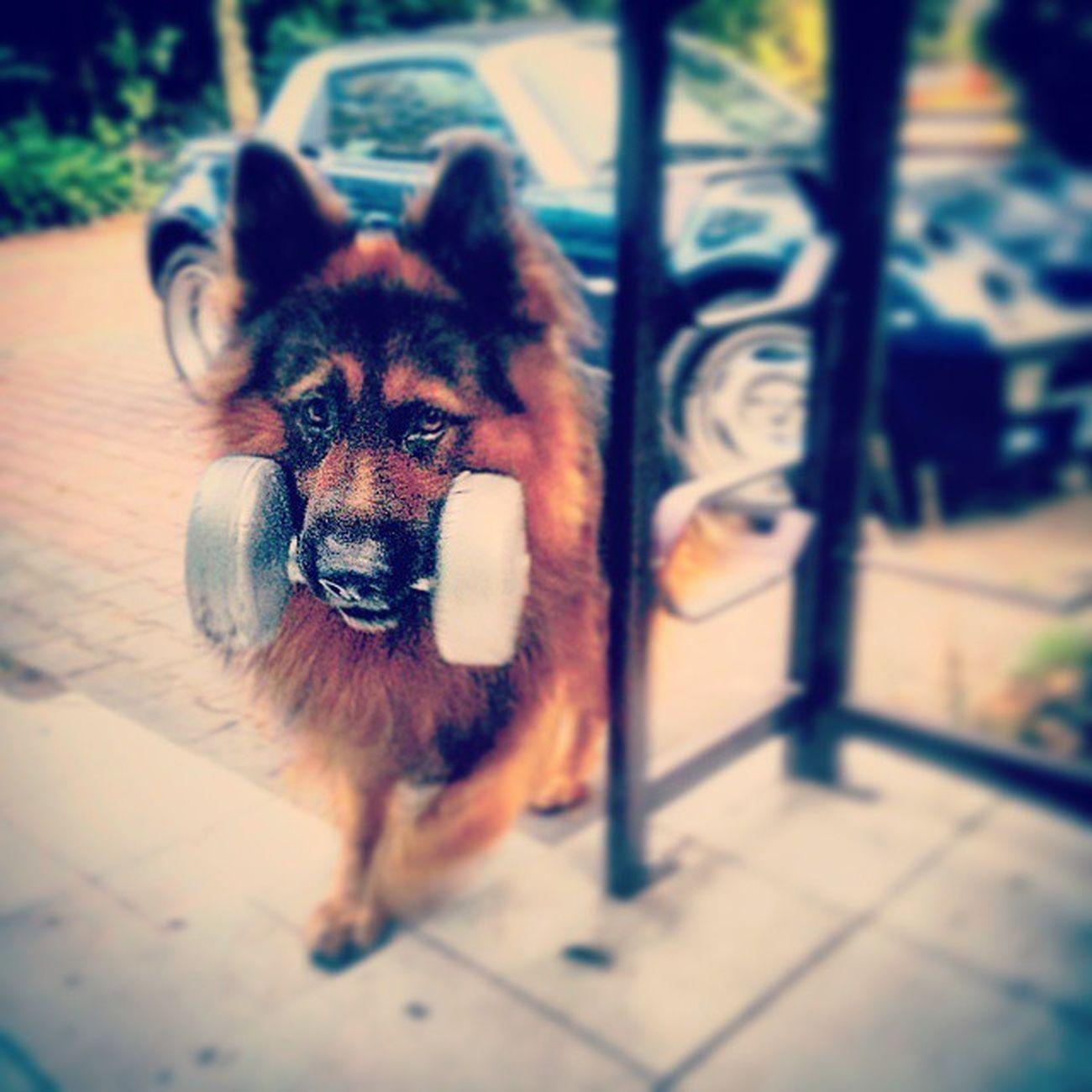 Ale Jestem Silny Hałhał Dog Weight Hantelek Strong Teeth Ouch Power