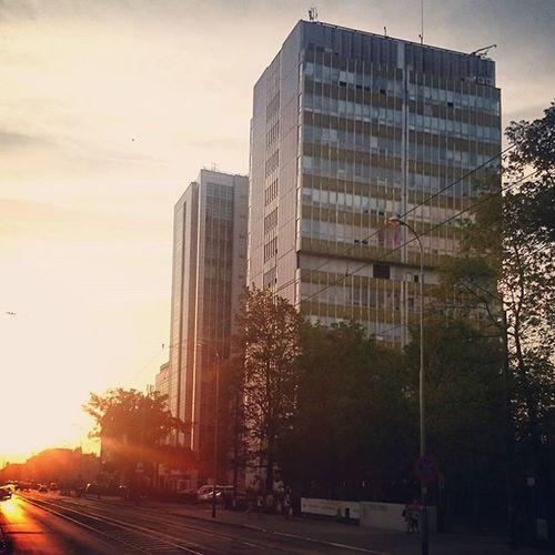 Poznań Energy Power Sunset Office Trees Sun Nature Clouds Sky Street City Dąbrowskiego Pasaz Jezycki Dscpoznan EwaJoannaMatczyńskaPhotography Collegium Wrzoska