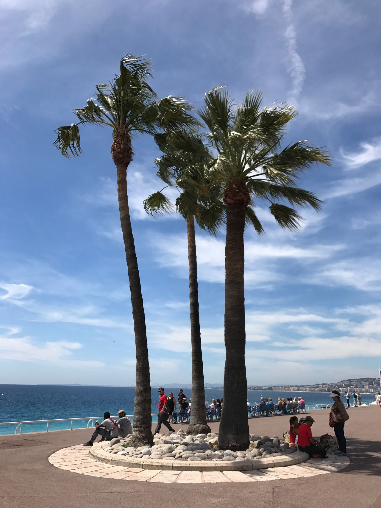 Méditerranée. Palm Tree Beach Cloud - Sky Sky Tree Sea Sand Nature Water Scenics Horizon Over Water Day Tree Trunk Beauty In Nature Vacations Tranquility Outdoors Real People