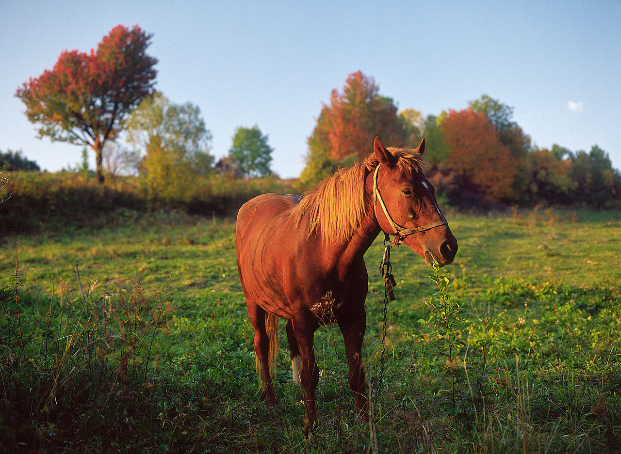 Beautiful stock photos of pferde,  Animal Themes,  Beauty In Nature,  Bridle,  Brown